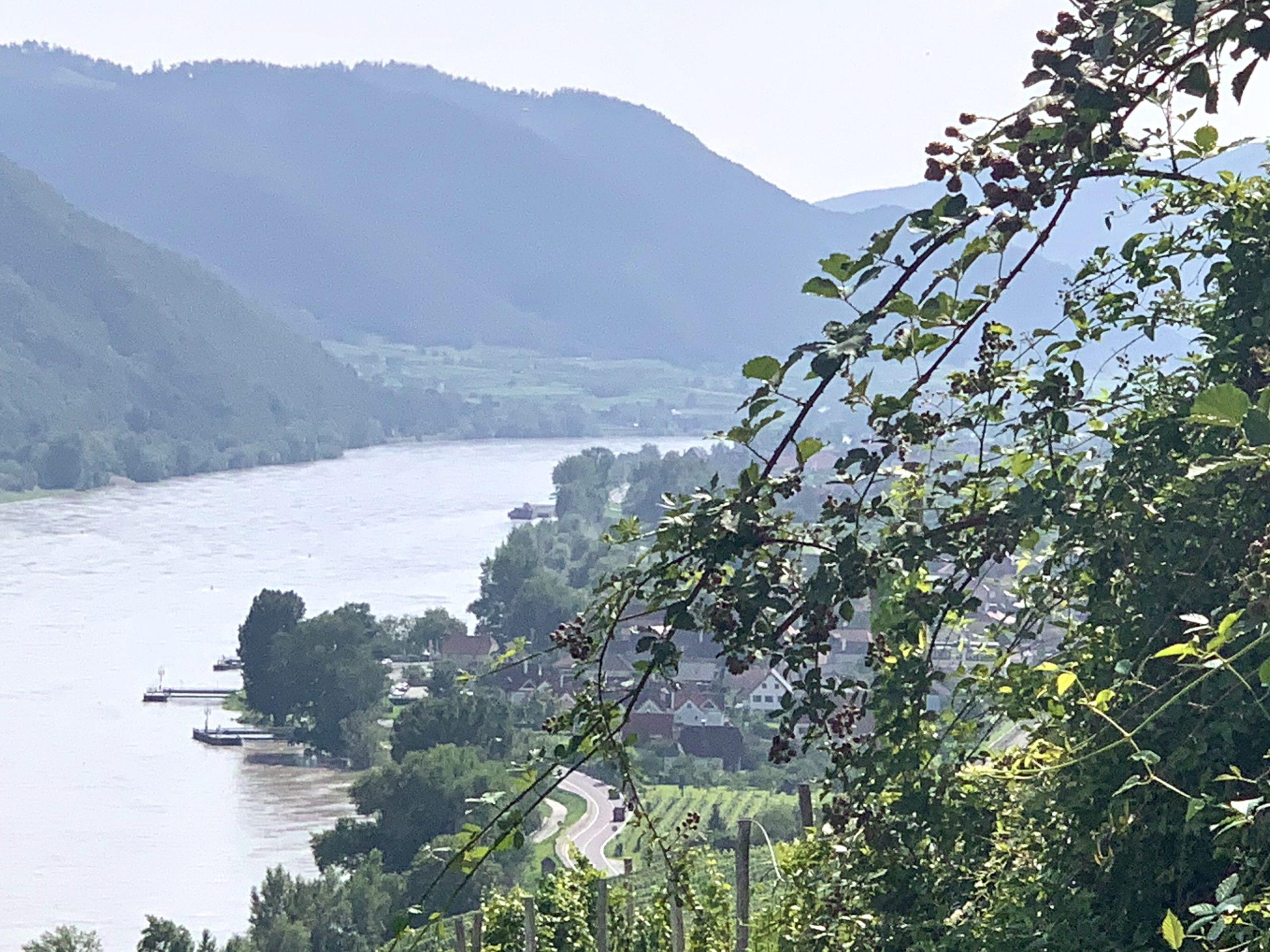 Blick auf die Donau bei Weißenkirchen