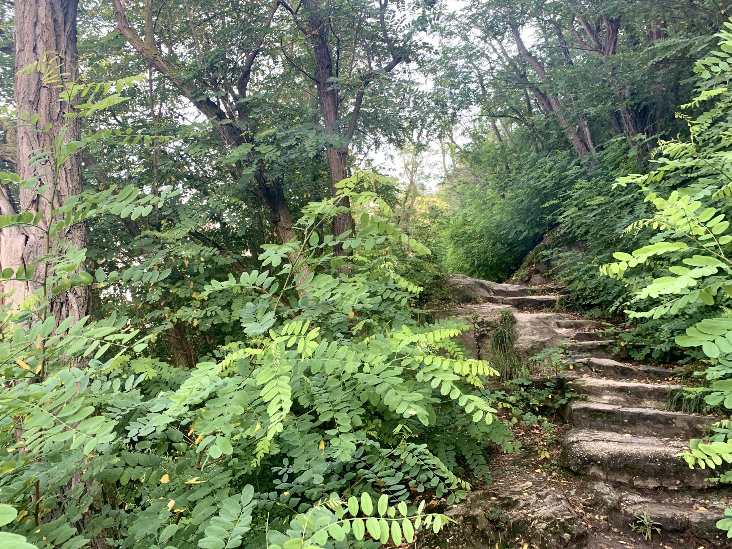 Stufen am Eselssteig zur Burgruine Dürnstein