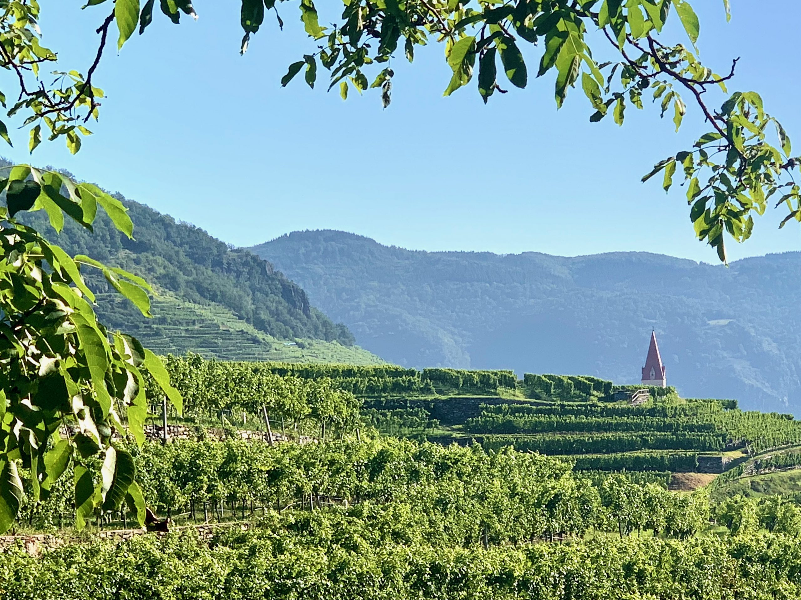 steinriegl vineyards